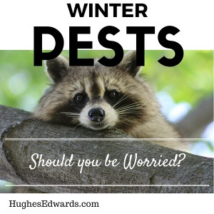 Winter Pests – Should You be Worried