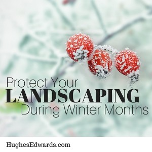 Protect Your Landscaping During Winter